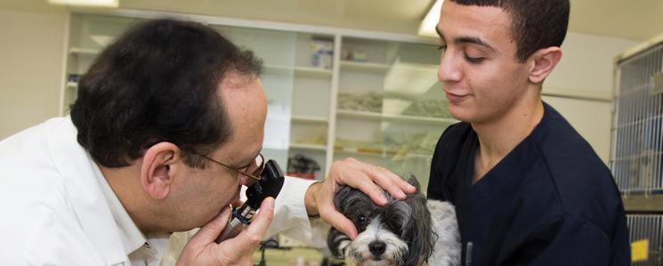 Ambassador Dog And Cat Long Beach